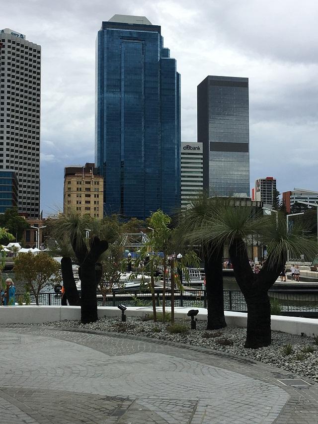 grasstrees city backdrop